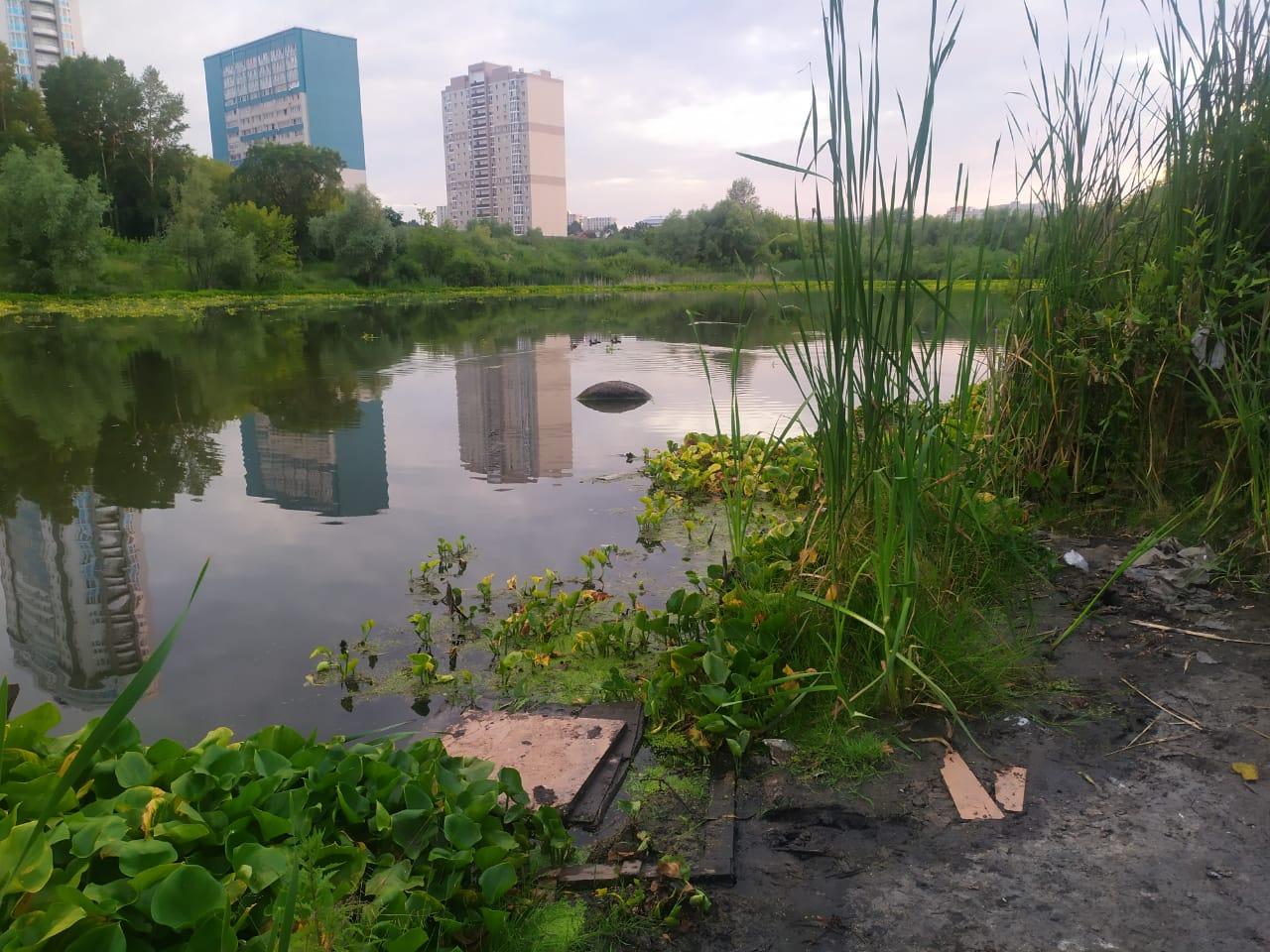 Озеро с уточками в Барнауле загрязнили покрышками и другим мусором